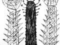dioscactus-b